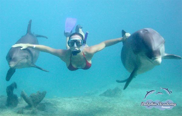 Snorkeling with Dolpins Honduras