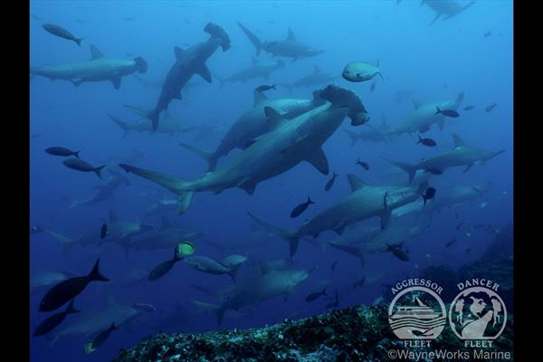 Galapogos Island Dive Liveaboard Experience