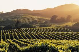 Nappa Valley Wine Tour