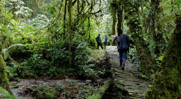 Bwindi Forest Walk