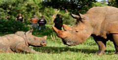 Rhino trekking in Ziwa Rhino Sanctuary