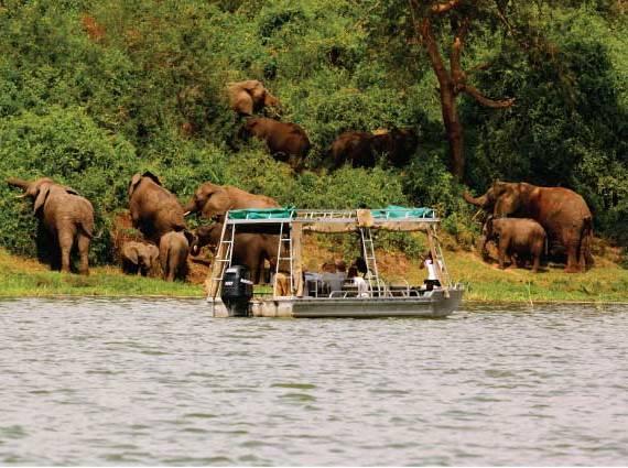 Boat safari on Lake Mburo