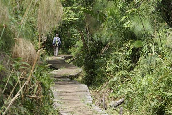 Crater Lakes and Bigodi Swamp Walk
