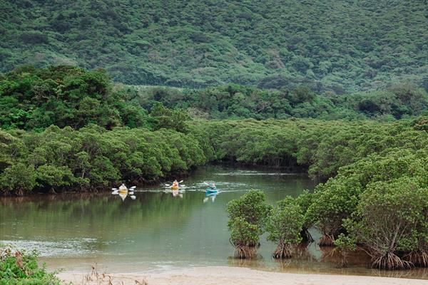 Mangrove canoeing and jungle trekking tour