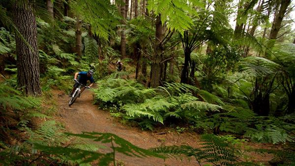 Mountain Biking the Redwoods Forest