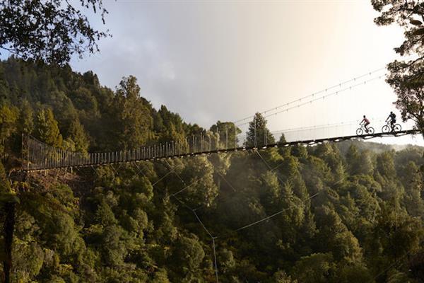 Mountain Biking the Timber Trail