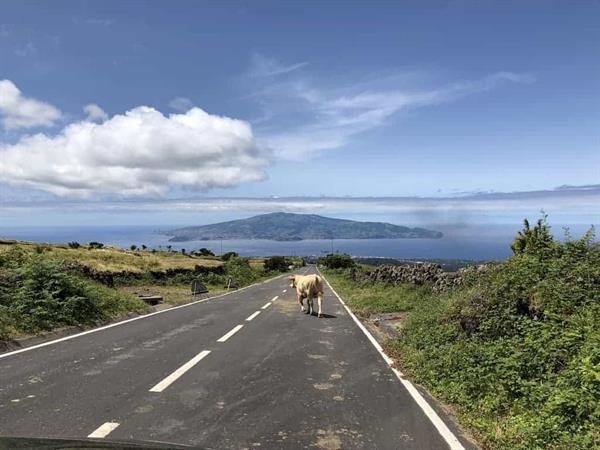 Rental Car - Sao Miguel Island