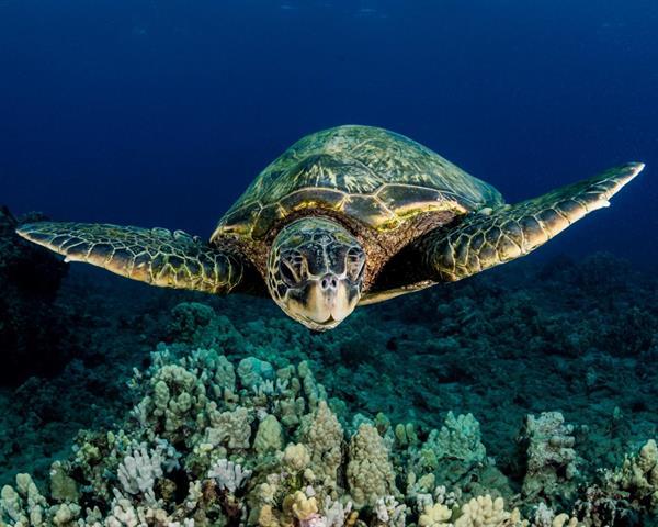 Turtle Snorkelling Trip