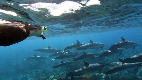 Dolphin Snorkel Experience