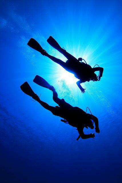 Scuba diving / Mergulho