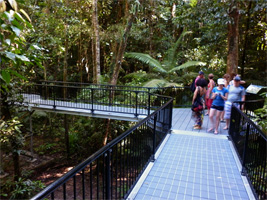 Daintree Discovery Tour