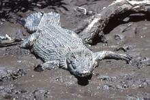 Lady Douglas Crocodile Cruise