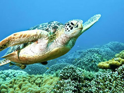 Great Barrier Reef Snorkelling Tour