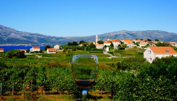 Fine wine to taste