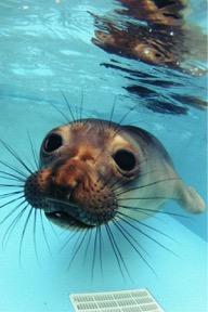 Marine Mammal Viewing - Laguna Beach