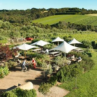 Private picnic in the grounds of Montalto Vineyard and Olive Grove