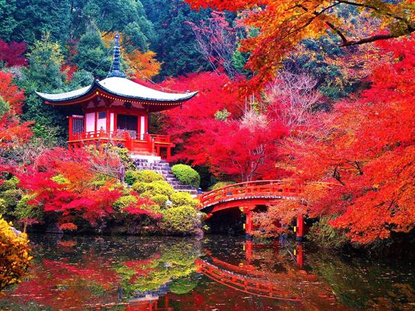 5 Nights in Ancient Kyoto