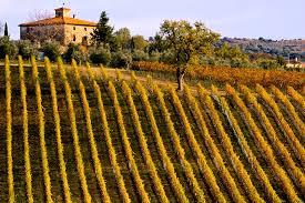 Guided Tuscan Wine Tour