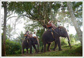 Elephant Feeding and Ride for 2 Adults and 1 Infant