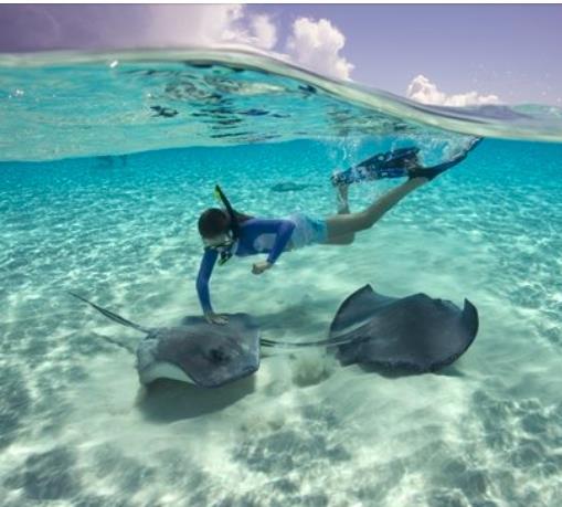 Snorkel with Stingrays