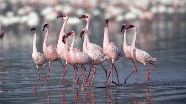 Lake Natron Flamingos Tour