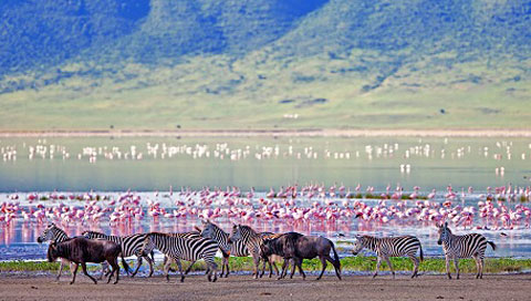 Big 5 spotting in the Ngorongoro Crater