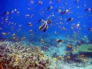 Scuba Diving off Mafia Island