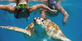 Hidden Gems Tour + Snorkeling with Turtles