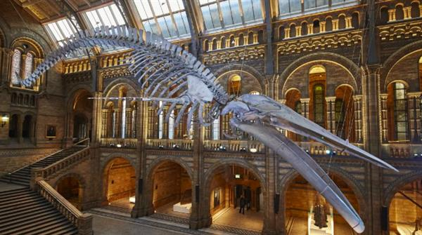 Natural History Museum, England