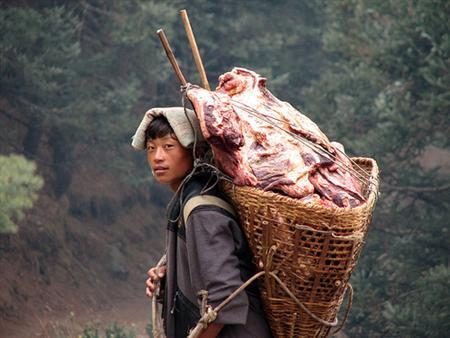 A Sherpa