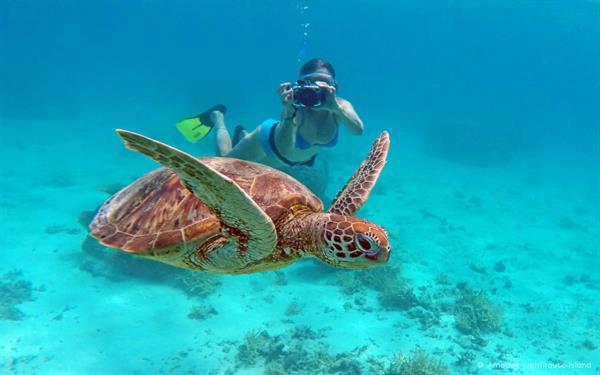 Turtle tour