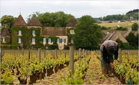 Chablis & Burgundy Vineyards