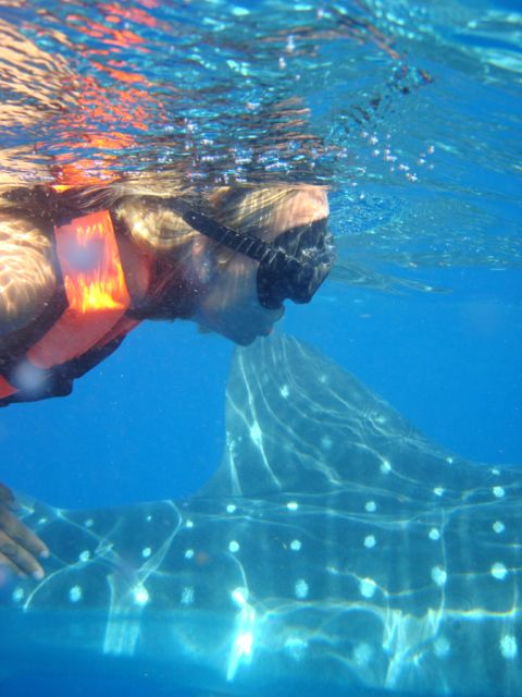 Whale Sharks Snorkeling Tour