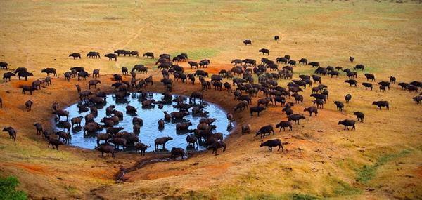 Kruger National Park Conservation Fee