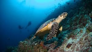 8-10 underwater dives