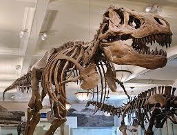 Metropolitan Museum of Art and Natural History Museum