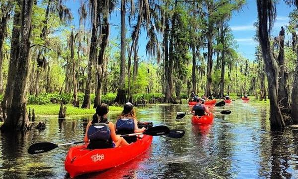 swamp tour and paddleboat cruise to check out the alligators
