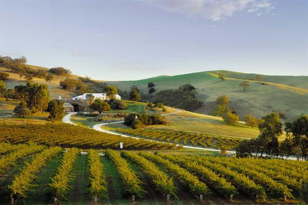 Adelaide Wine Tour