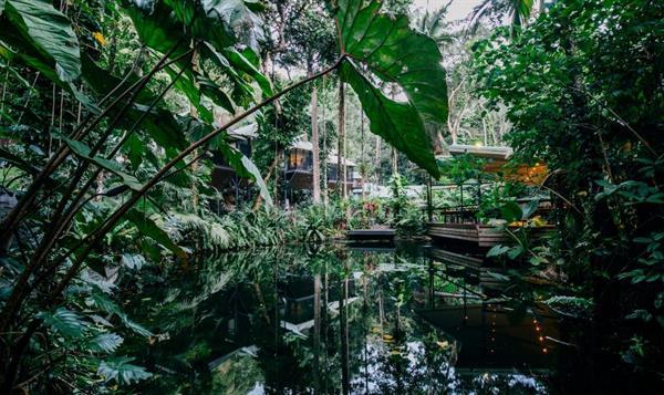 Daintree Eco Lodge and Spa Treehouse