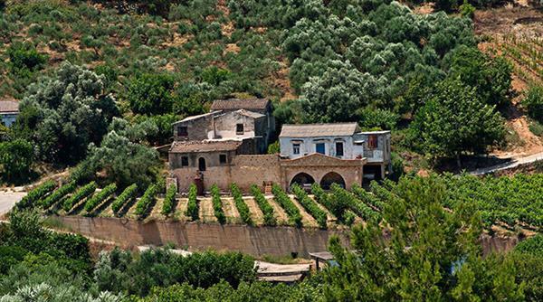 Olive Oil & Wine Tour
