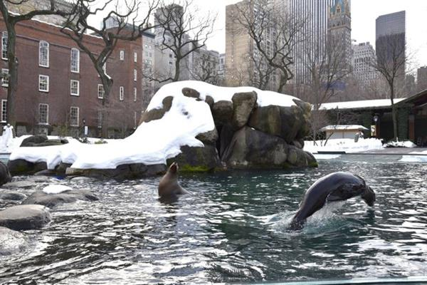 2 x Central Park Zoo + Meal