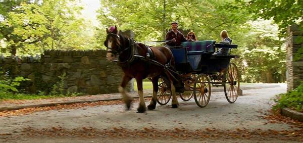 Horse Carriage Ride Around the Lake