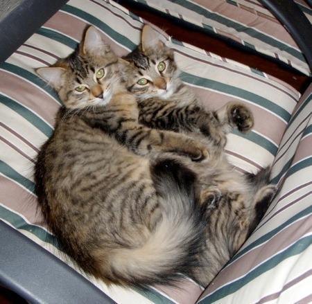 Cat Sitting Jason & Sookie