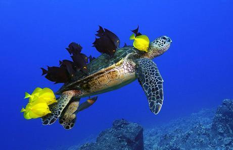 Daytrip to visit turtle habitats