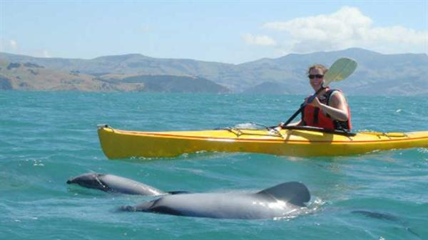 Kayak Akaroa Harbour