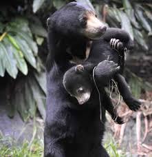 Bear Care Tour - Phnom Penh