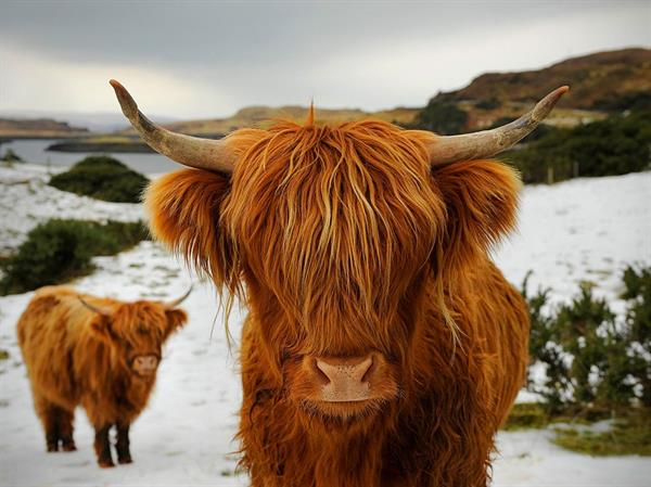 Scottish Highlands Souvenirs