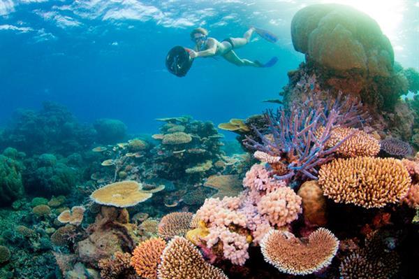 Snorkeling trip in the reef