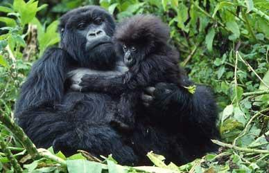 3 day safari to see the Mountain Gorillas