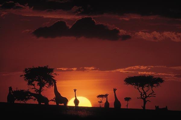 Safari to the Masai Mara